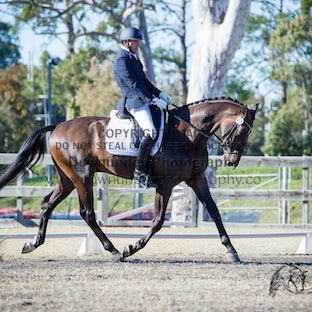 Brisbane CDI - Young Horse Classes (Friday) - Images from the Young Horse Classes - Friday, apologies if we have missed any horses.