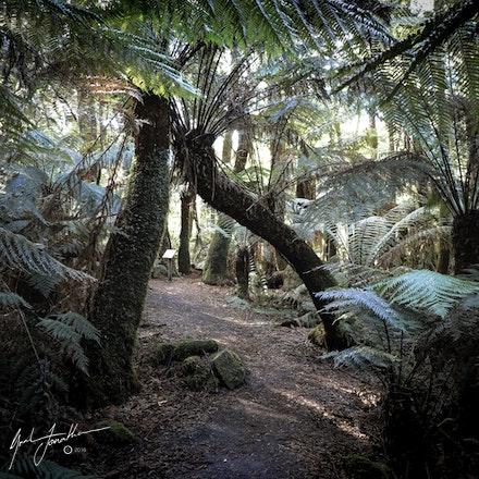 Tas Forrest 3