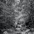 Huntsman creek ,Meander,Tasmania