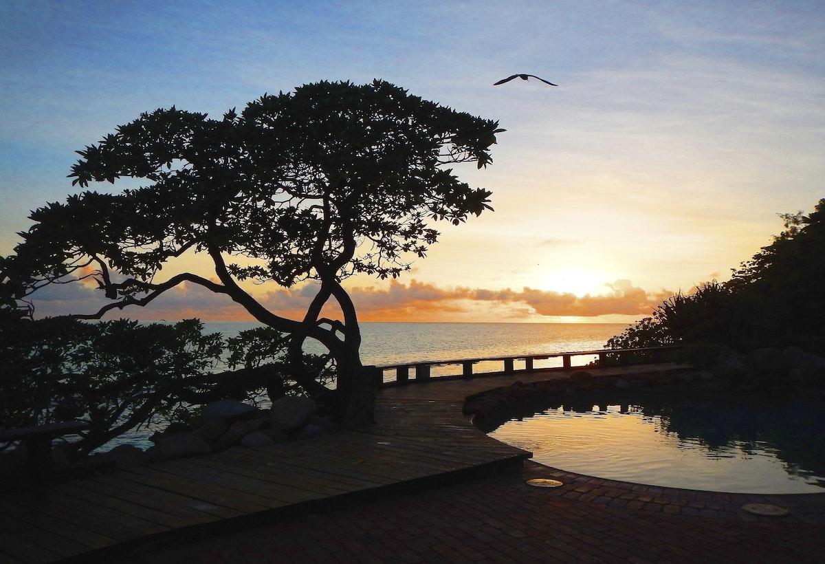 Morning Light - heron sunrise, reflections in pool.