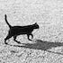Cat & Shadow - Each archival photograph is stamped and signed by Robert and a brief description of how it was taken.