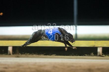 Greyhounds 071015-16