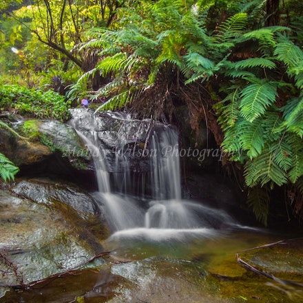 Leura Cascades, Blue Mountains - NSW