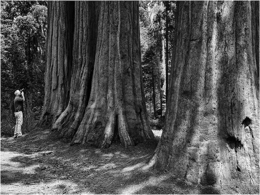 Ian-SequoiaNP-03x04