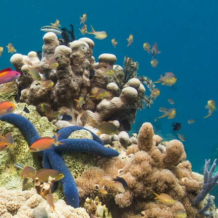 Pulau Satonda coral - Underwater environment, Pulau Satonda, Indonesia