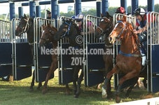 14 NOV RANDWICK JUMP OUTS