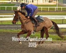 16 JUNE RANDWICK TRACK WORK