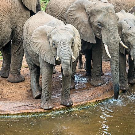 021 Thanda Safari Lodge 030515-8247-Edit