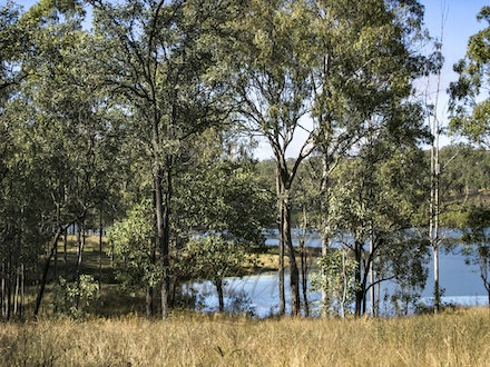 By the water - Trees line a small inlet into the main tributary to the dam.
