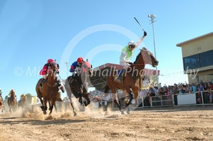Thoroughbred Portfolio - Photos taken by Michael McInally