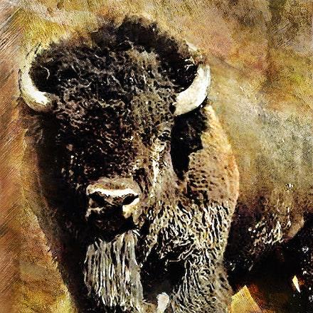 Buffalo Grunge Poster 36x24